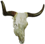 Cowskullright