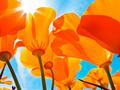 Floral7.png