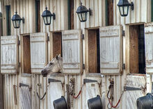 Horse in stable flckr allspice1