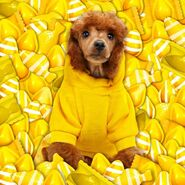 A dog in yellow candies