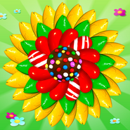 The Color Bomb Calendula