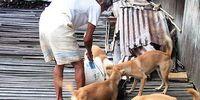 Borneo Dogs