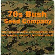 70s bush camouflage