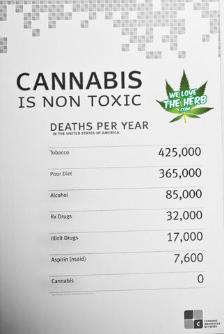 File:Annual deaths. None from cannabis.jpg