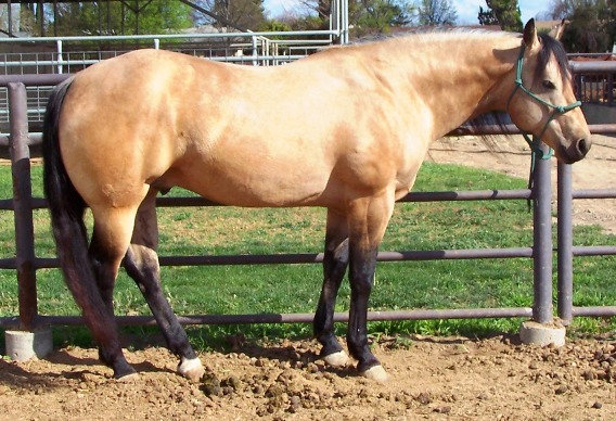 File:Dun horse.jpg