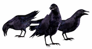 REOutbreakCrows
