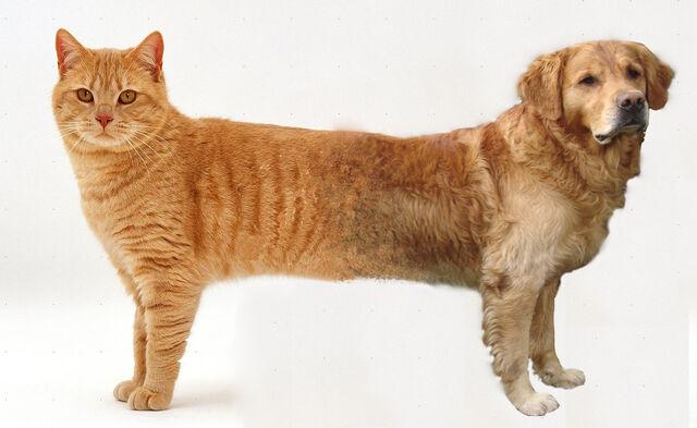 File:Catdog real.jpg