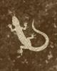 Caravaneer Industry - Lizard Breeding