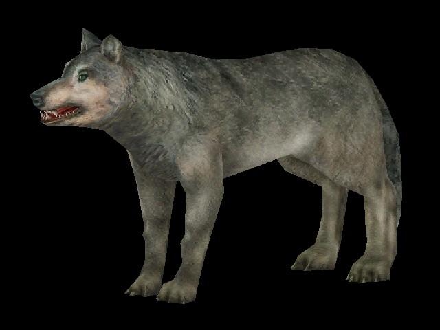Wolf | Carnivores Wiki | FANDOM powered by Wikia