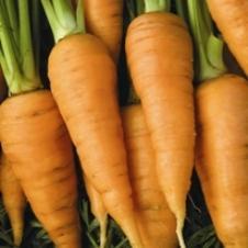 File:Carrot red core chantenay.jpg