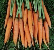 File:Carrot-scarlet-nantes-lg-215x201.jpg