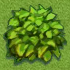 File:Green Shub.png