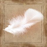 File:Feather.jpg