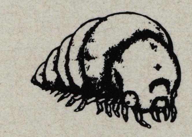 CVA She-Worm