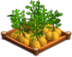 Potatoes 02