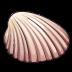 ShellMaterial 01 Icon