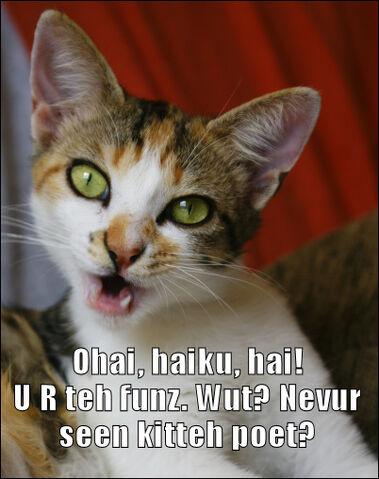 File:Haiku cat.jpg