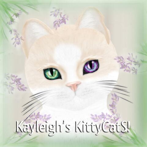 File:Kayleigh's KittyCatS 1024 x 1024PX.jpg