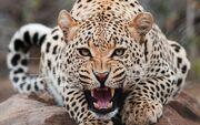 Big-Cats-wild-animals-34365410-1920-1200