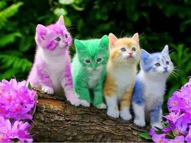 File:Cute Colorful Kittens.-0.jpg