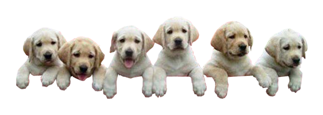 File:Puppies-climbing-transparent-image.png