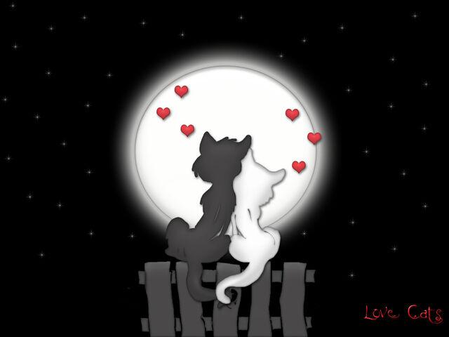 File:Love moon cats1.jpg