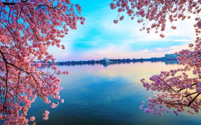 File:Nature-wallpapers-natural-green-mac-desktop-images-clean-weathers-free-natural-images-trees-fresh-air-1810x1283-736x459.jpg