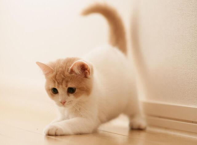 File:Cute Little Cat-wallpaper-10620292.jpg