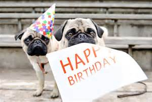 File:Happy birthday pug.jpg