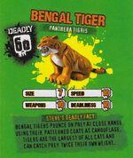 Deadly60Factsheet-Bengal Tiger