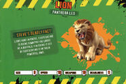 Deadly60Factsheet-Lion