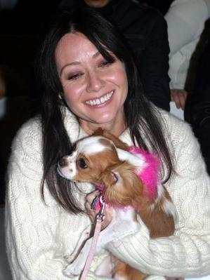 File:Shannen puppy1.jpg