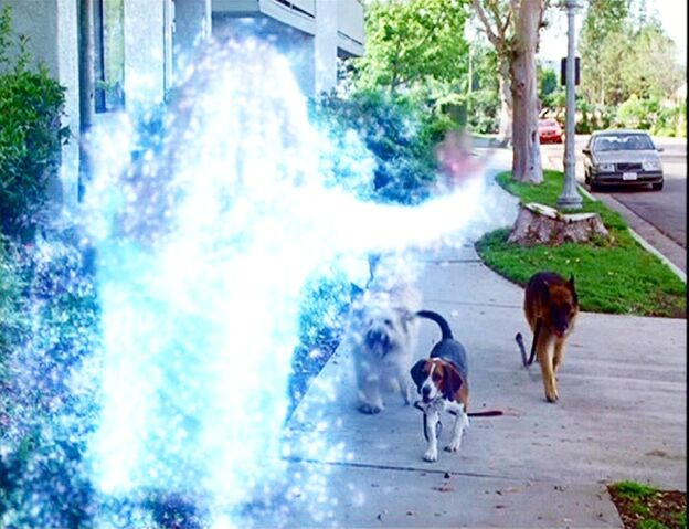 File:Paige as a Dog Walker.jpg