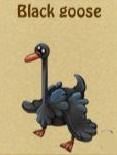 BlackGeese1