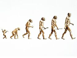 Nc evolution 080103 ms