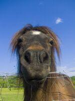 HorseRAW