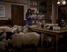 Sheep prank
