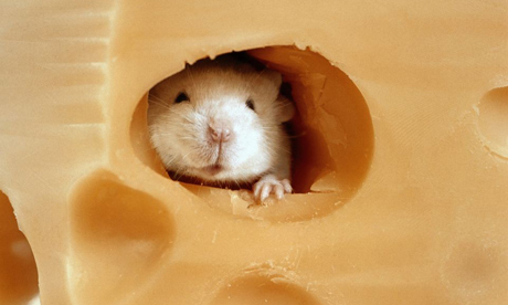 File:Mouse Cheese.jpg