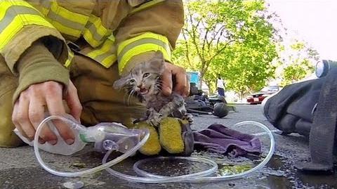 GoPro Fireman Saves Kitten