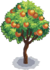 Harvestable-Orange Tree