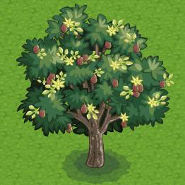 Chefville-Avacado-Tree