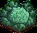 Crop-Backyard Broccoli