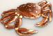 Ingredient-Snow Crab