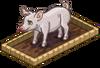 Harvestable-Baby Pig