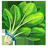 Ingredient-Spinach