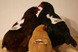 Chickenposesmall