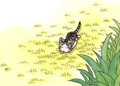 File:Sad cat sad.png