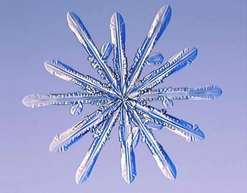 File:Twelve-sided snowflakes.jpg