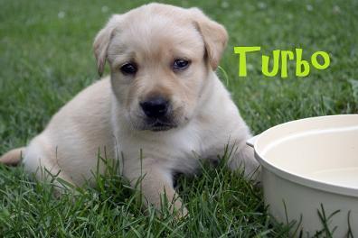 File:Turbo.JPG