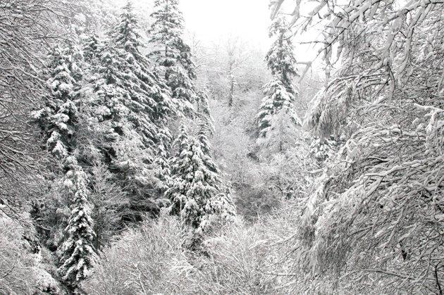 File:Snow 2.jpg